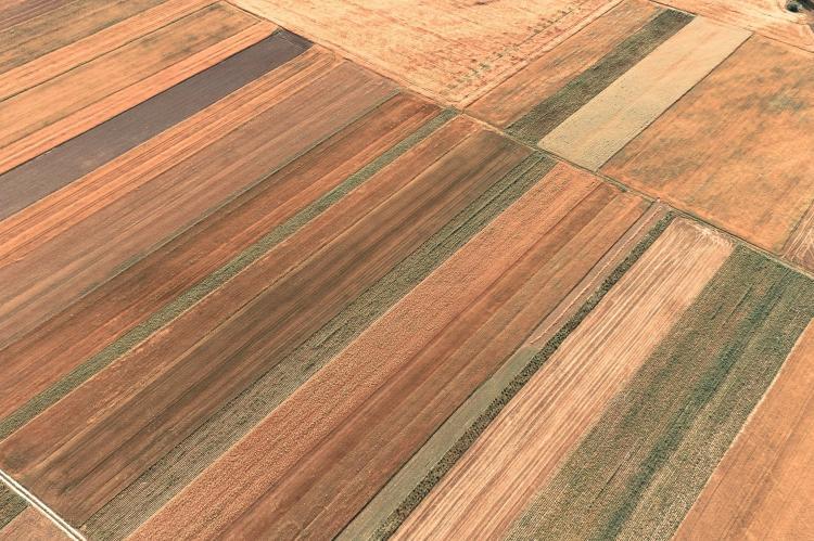 field-line